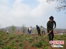 河南汝州:春日种下菊花 助力村民脱贫致富