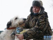 """""""俄罗斯狩猎""""猎犬文化节"""