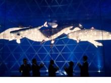 """上海科技馆""""鲸奇世界""""展览开幕 新年""""鲸""""喜不断"""
