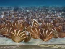 抓住五亿年前的盗贼:西北大学科学家发现地球上最早偷窃寄宿关系